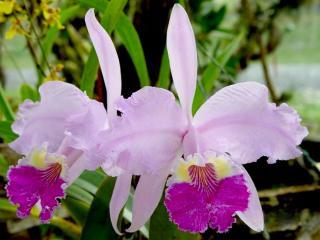20130509151544-orquidea-006.jpg