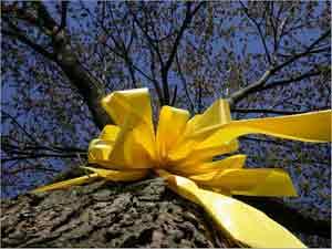 20130905113729-cintas-amarillas.jpg