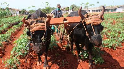 20210503134216-abricultura-con-traccion-animal1205-pavos-1.jpg