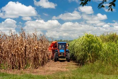 20210505141859-agricultura-alimentosf0196895.jpg